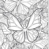 Kleurposter: Vlinder – editie 1